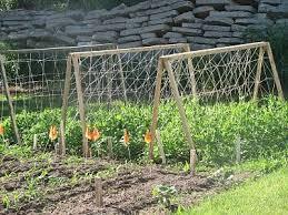 It S A Boy S Life For Me Cucumber Trellis Cucumber Trellis Diy Garden Trellis