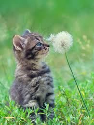 Cat Proofing Your Garden Purina