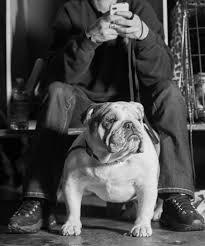 Westminster Dog Show Offers No Joy for ...
