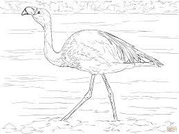 James Flamingo Kleurplaat Gratis Kleurplaten Printen