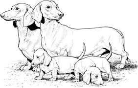 Teckel Met Pups Kleurplaat Gratis Kleurplaten Printen