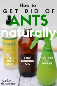 naturally get rid of ants in your house