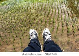 Similar Images Stock Photos Vectors Of Growth And Learning Behavior Of Children Person And Child Happy Learning Wearing Shoes 1028475784 Shutterstock