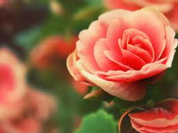 ورود رومانسية للاهداء 2020 Beautiful Flowers Images Wallpaper