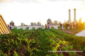 from the world s largest rooftop farm