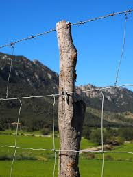 Free Images Tree Grass Post Wind Thorn Pile Mast Metal Security Barrier Fenced Limit Defense Pasture Fence Demarcation Barbed Wire Fence Wildzaun Cattle Fence Wildlife Fence Wire Meshes Node Netting Forestry