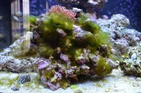 algae eaters the 7 best for your