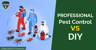 Professional Pest Control vs DIY : What Should You Choose?