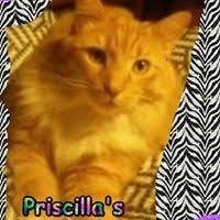 Priscilla Clark (muffin717) on Pinterest