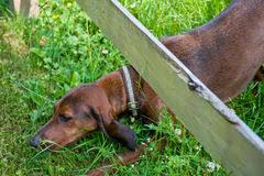 Dog Crawling Under Fence Stock Image Image Of Creature 6284297