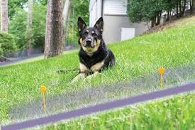 8 Best Invisible Wireless Dog Fences Reviews Top Picks 2020 Doggie Designer