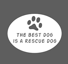 Amazon Com Crdesign Best Dog Is Rescue Dog Animal Shelter Adopt Vinyl Decal Sticker For Car Truck Suv Bumper Window White Automotive