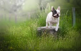lawn bokeh dogs summer