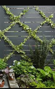 Diagonal Wire For Climbing Plants Diy Garden Trellis Diy Trellis Backyard Landscaping Designs