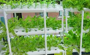 com lapond hydroponic grow kit