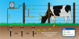 What Happens When An Animal Touches An Electric Fence