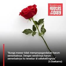 gambar bunga mawar quotes koleksi gambar bunga