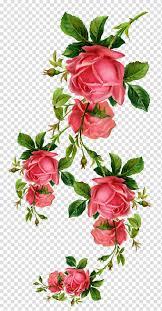 زهور وردية وردية وردة وردية عتيقة وحدود وردية وردية Png