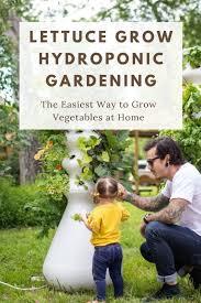 lettuce grow hydroponic gardening the
