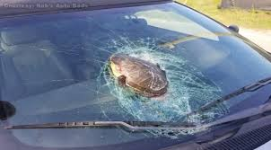 graphic flying turtle smashes into car