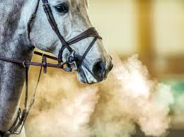 how to battle everyday horse stressors