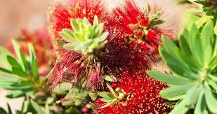 native plant fertiliser keeping
