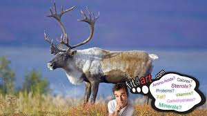 caribou meat nutritional value and
