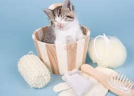 5 Consejos para cuidar el pelo de vuestro gato – Sonrisas de gato