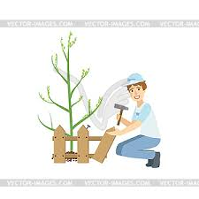 Volunteer Building Fence Around Newly Planted Tree Vector Clipart