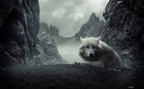 1019 Wolf Hd Wallpapers Background Images Wallpaper Abyss