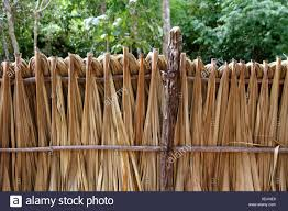 Dried Palm Leaves Mexico High Resolution Stock Photography And Images Alamy