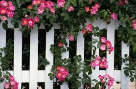 The Best Garden Fence Design For Keeping Animals Out Home Guides Sf Gate