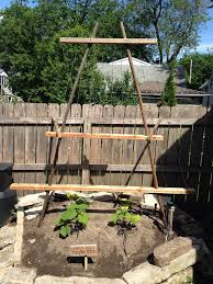 We Planted A Vertical Pumpkin Patch In Our Tiny Urban Backyard Offbeat Home Life