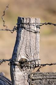 Old Fence Post With Barbed Wire Is A Strong Memory From My Childhood So Many Barbed Wire Fences Old Fences Country Fences Country Scenes
