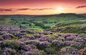 flowers hills field england sunset