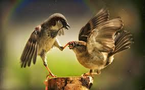 خلفيات طبيعية عالية الجودة 4k Ultra Hd Pet Birds Funny Birds
