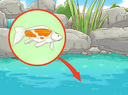how to clean a koi pond 15 steps with