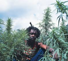 """Legalize It"""": Lee Jaffe Keeps Peter Tosh's Memory Alive – Repeating Islands"""