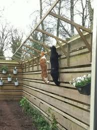 How Cat Proof 3 8 Ft Fence Thecatsite