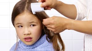 how to find head lice in your child s hair