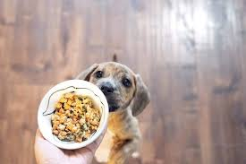 the best fresh dog food delivery of