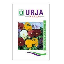 urja seeds indian flower seeds