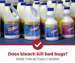 does bleach kill bed bugs the answer
