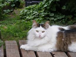 Turkish Angora Cats, The Cats That Love To Play.