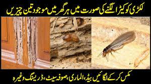 Download Deemak Insect Background
