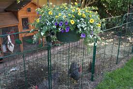 The New Chicken Fence Sunny Simple Life
