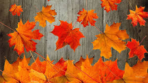 65 y autumn wallpaper and images