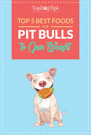 pitbulls to gain weight and lean muscle