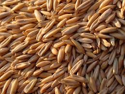 grains in horse feeds the feed room