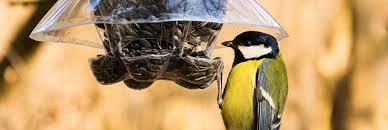 ment nourrir les oiseaux en